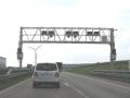 Portiques sur les autoroutes, c'est pour l'écotaxe...