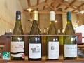 Les vins bio...