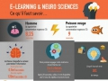 Quel lien entre e-learning et neuro sciences ?...