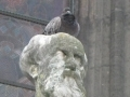 Pigeons : éviter leurs nuisances...