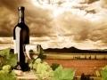 Les vins du Nouveau Monde...