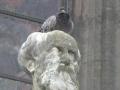 La cathédrale d'Amiens lutte contre les pigeons...