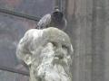 L'auto-répulsion pour lutter contre les nuisances des pigeons...