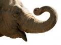 L'éléphant...