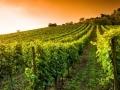 Les grands crus de Bourgogne...