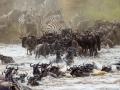 Le parc du Serengeti en Tanzanie, la beauté à l'état sauvage...