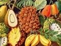 Les fruits...