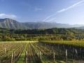 Les vins de Savoie...