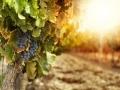 Vins du Jura : vente du domaine Rolet...