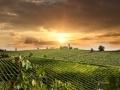 Le terroir viticole...