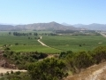 La viticulture au Chili...