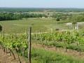 Le vin charentais...
